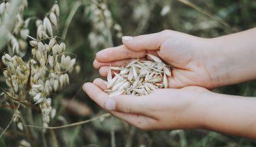 Die kleine Getreidekunde  Korn, Anwendung und Herstellung unter die Lupe genommen